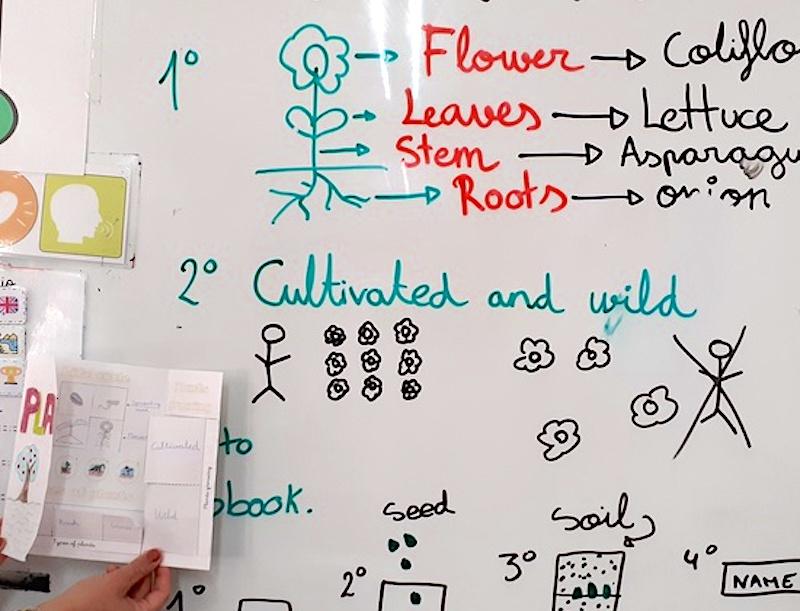 Las plantas como seres vivos 1º Primaria